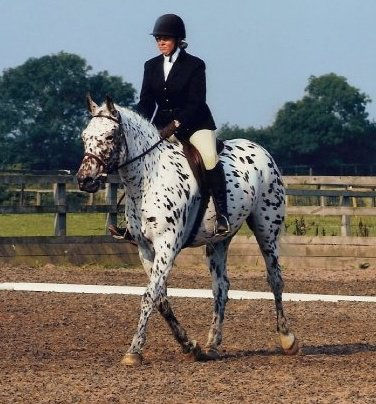 Me and Freckles when we both a bit younger doing a dressage test