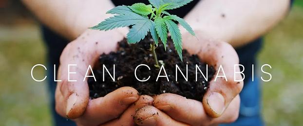 cleancannabisheader.webp