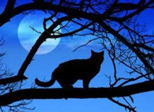 cat at night.jpeg
