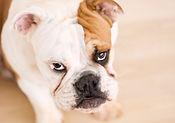 dog-15-betzen-itchy-dog-610x428.jpg