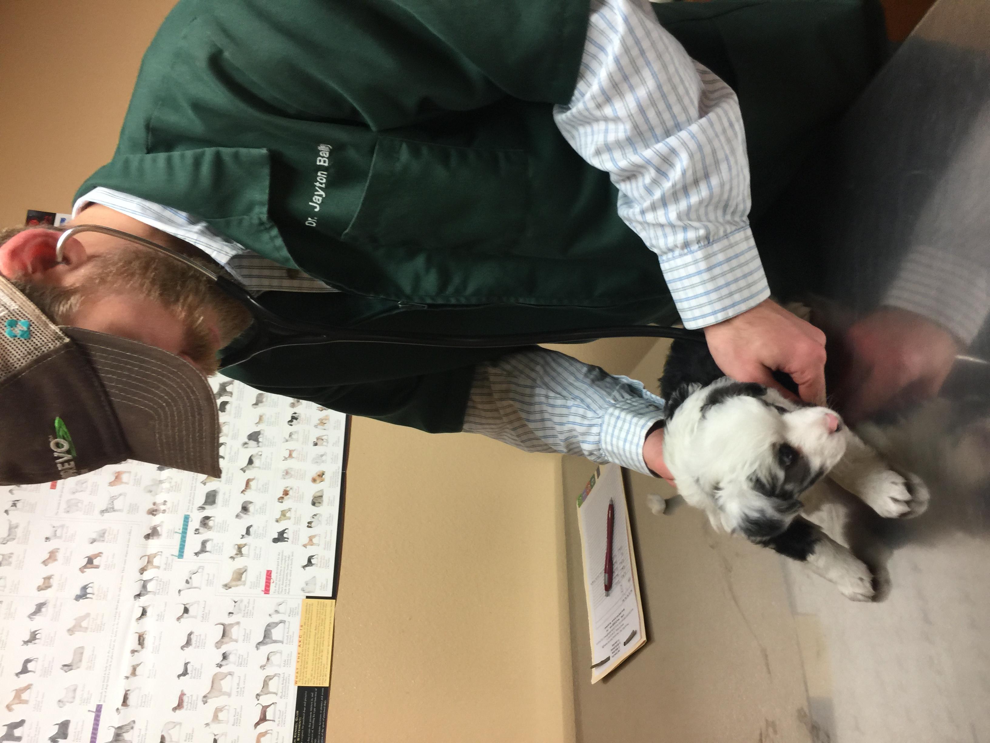 examining puppy