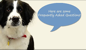 faqs-belle-meade-animal-hospital3.jpg