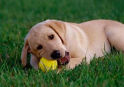 Pet care puppy