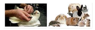 Bird and pocket pets