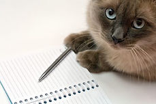 cat-and-notebook.jpg