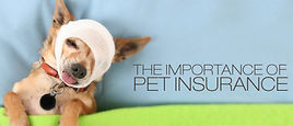 importance-of-pet-insurance-e14744062674