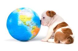 puppy_looking_at_world-d1e56e82a25d2feb9