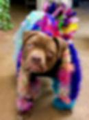 ReeCee office dog