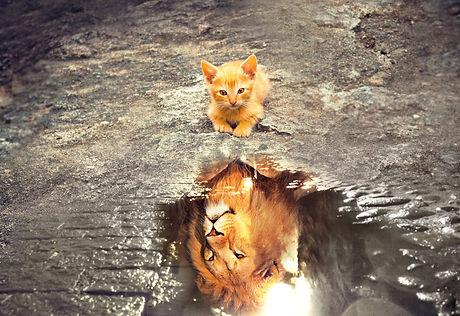 Codéveloppement chat lion