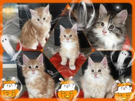 🎃🎃🎃 Happy Halloween