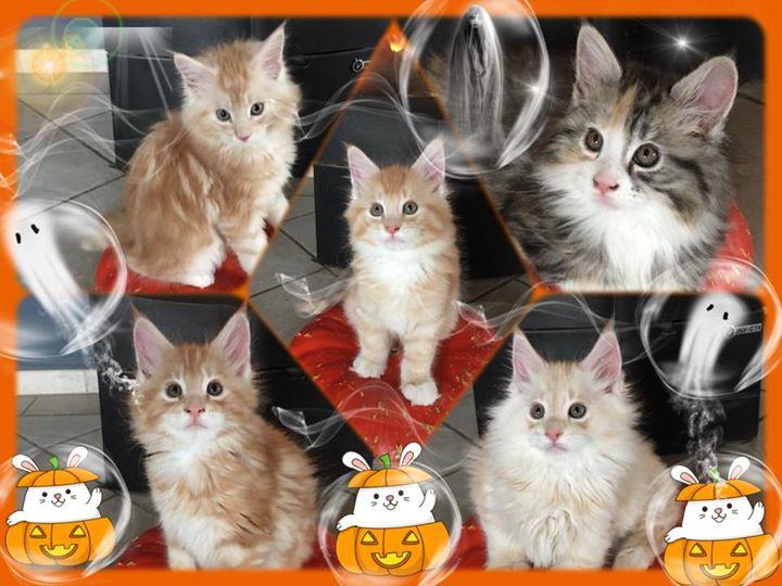 🎃🎃🎃 Happy Halloween 🎃🎃🎃.jpg