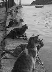 Chats Port.jpg