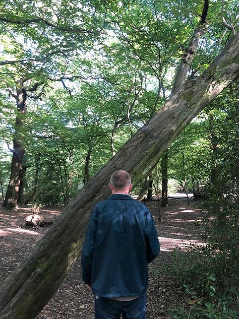 The Furrow Tree Back.jpeg