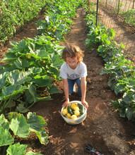 The Grateful Farm