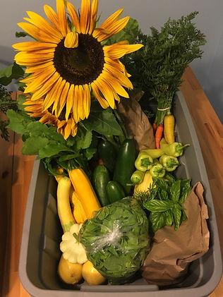 Summer Veggie Box.JPG