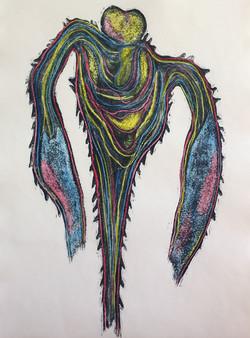 Tripos platicornis - dinoflagellate