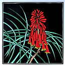 Diane Masters 11 Red blandfordia 30 x 30