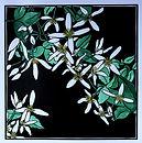 Diane Masters 10 Native  clematis 30 x 3