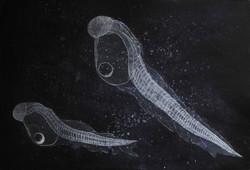 fish larvae adrift 39 x 57 cm
