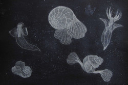 Angels and Sea butterflies 39 x 57cm