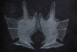 dinophysis tripos - the hands 39 x 57