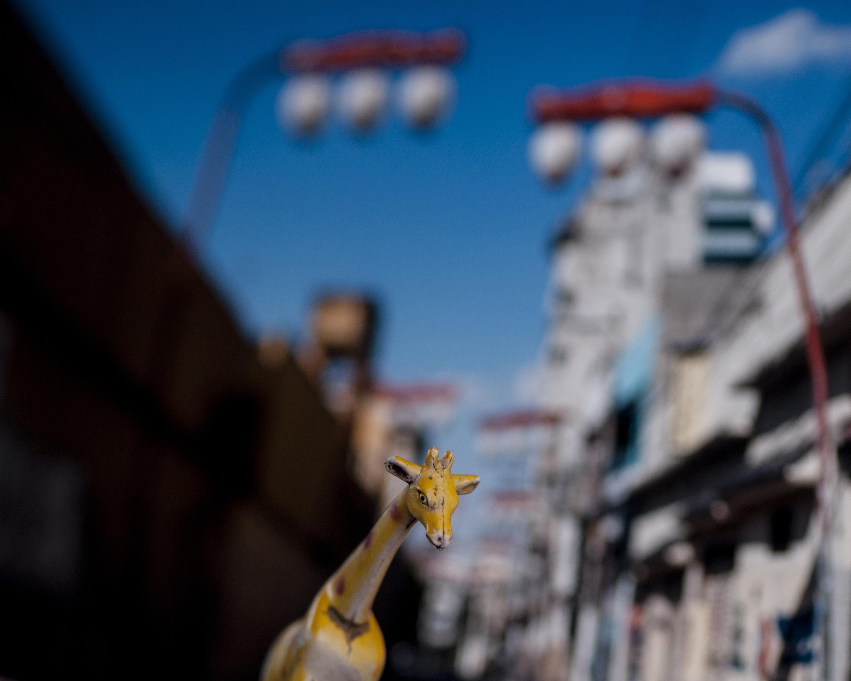 A Girafa japonesa