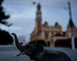 Elefante na Luz