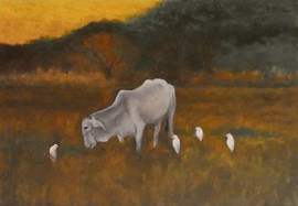 Mexico Series: Cows & Egrets