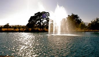 SAKS_CBP_fountain.png