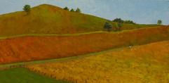 Striped Fields