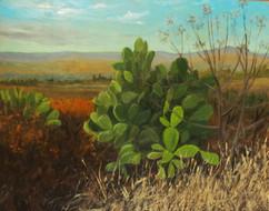 Mexico Series: Nopal Cactus