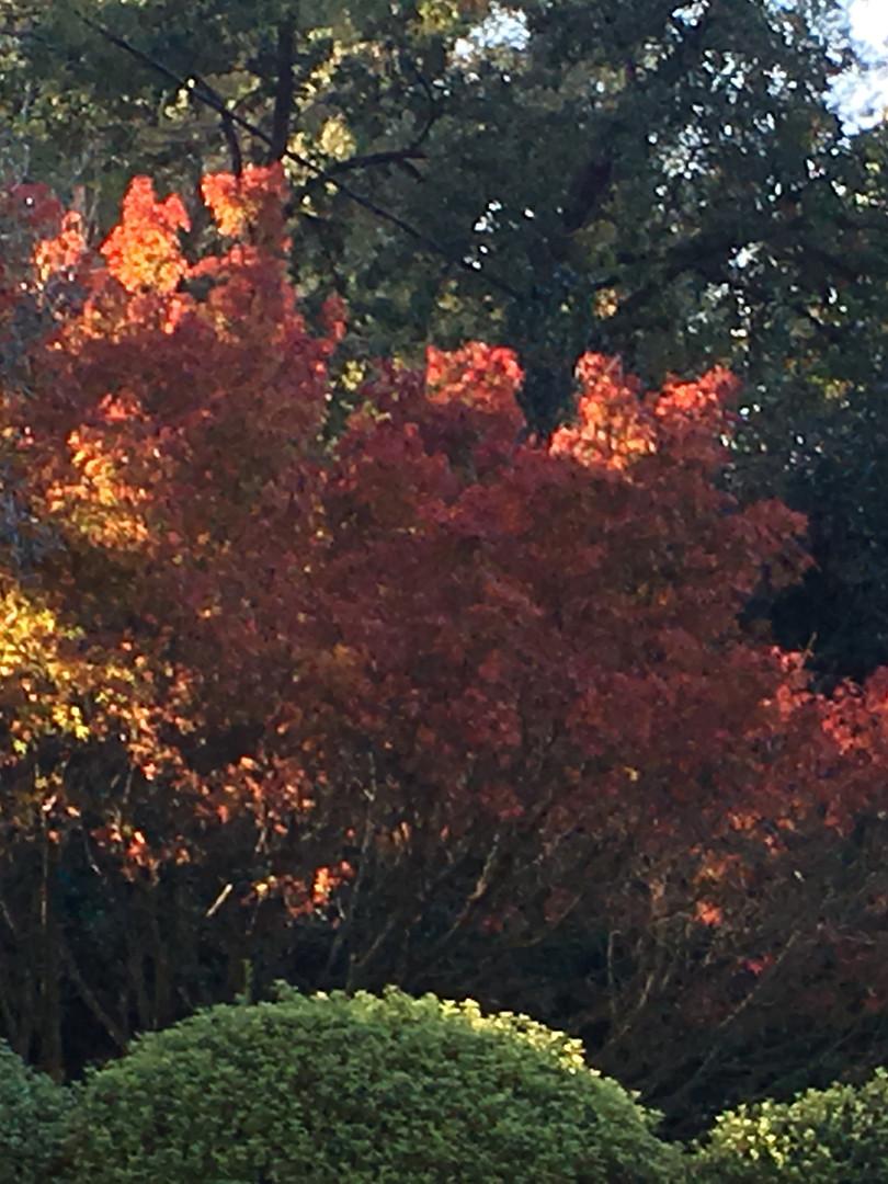 La Bastidasse automne.JPG
