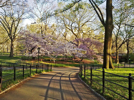 Spring Activities To-Do List in NYC
