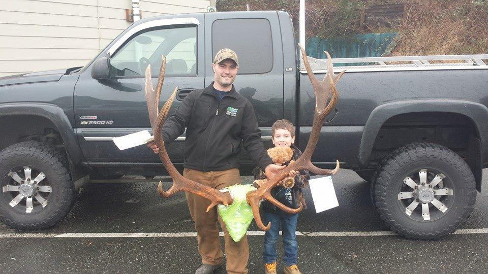 Roosevelt Elk - 318 1/8