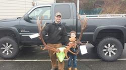 Roosevelt's Elk