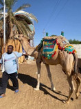 Camel rides in Egypt