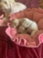 Nikki Puppies.jpg