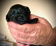 ember puppy with eyes open.jpg