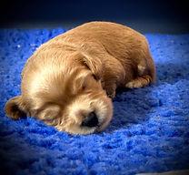 ember puppy.jpg