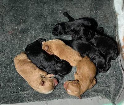 embers puppies.jpg