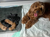 Ember and pups.jpg