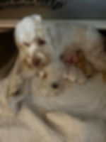 nikki puppies may 3.jpg