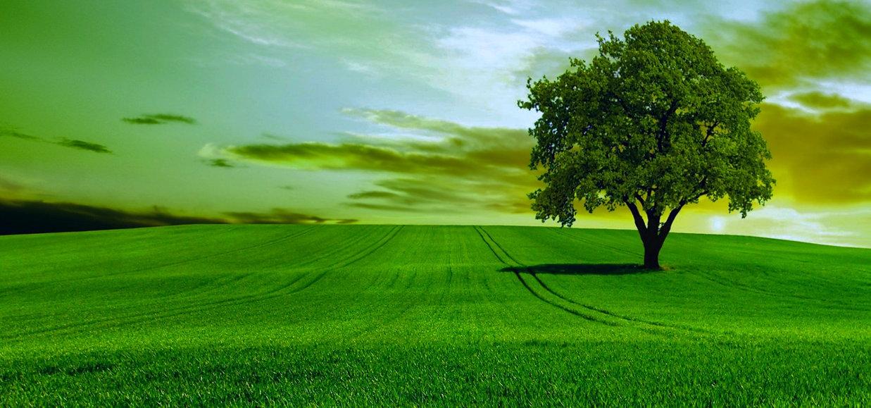green-nature-sky-tree_edited.jpg