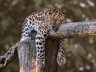 The vital importance of Sleep