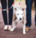 City of Elderly Love, a senior pet animal rescue in Philadelphia!