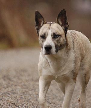 éducation canine 71, 42, 03