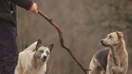 La prédation, un comportement de prédateur