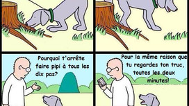 Le marquage chez le chien