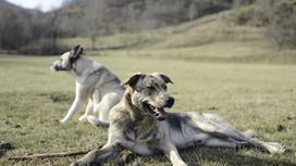 """Les chiens et le """"statique"""""""