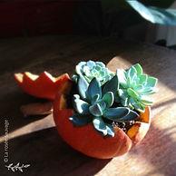 Je vous propose de transformer le célèbre et légendaire légume d'automne en pot de plantation pour plantes grasses. > > dimanche 7 novembre, 16h à 17h - à partir de 7 ans - sur inscription : 25 euros - renseignements et réservation en boutique